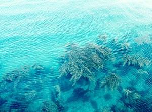 海藻カルシウム